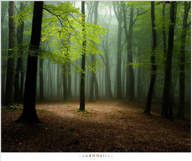 Het licht heeft de laatste schuilplaats van de ochtendnevels gevonden. (39mm; ISO100; f/11; t=1,3sec)