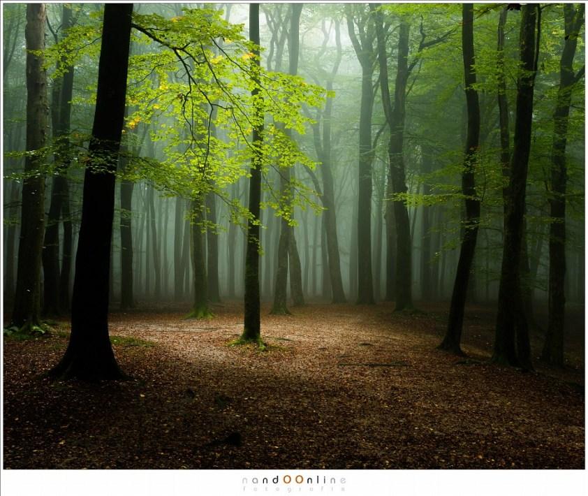 Herfst in het Speulderbos. Het licht heeft de laatste schuilplaats van de ochtendnevels gevonden. (39mm; ISO100; f/11; t=1,3sec)