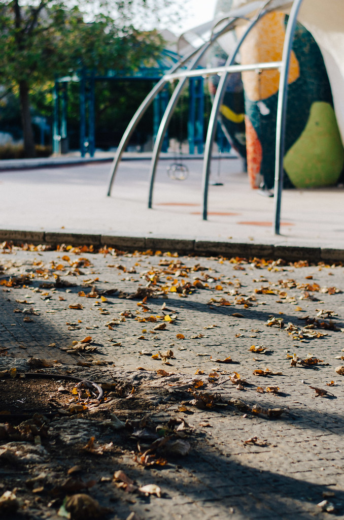 Autumn leaves near the playground
