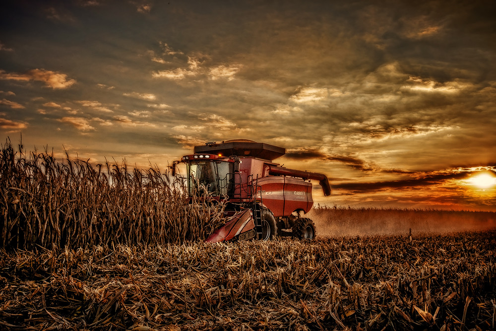 Free Fall Harvest Wallpaper Harvest At Sunset Case Combine Picking Corn At Sunset