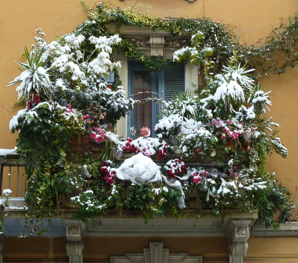 Il Balcone fiorito di via Civerchio  Neve a Febbraio
