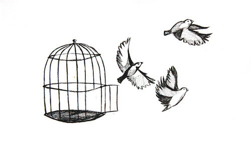 birds-cute-draw-fly-freedom-Favim.com-129533_large_large