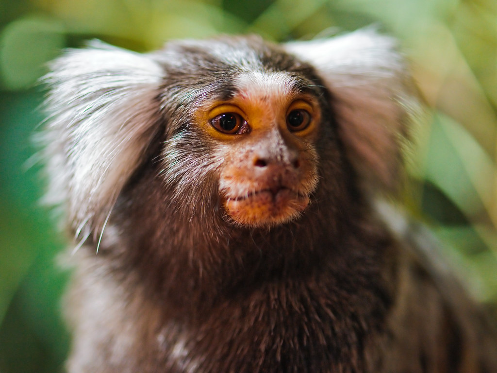 3d Wallpaper Images Portrait Of A Cute Marmoset At Reptilexpo There Isn T