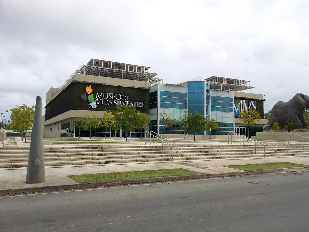 Puerto Rico Wildlife Museum Of San Juan