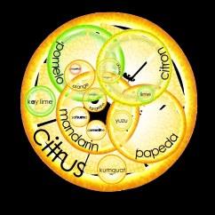 Parts Of An Orange Fruit Diagram Bpmn Conversation Citrus Venn From My Blog Post On The Incestuous