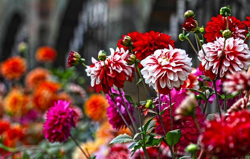 Ajj Bosonto Spring In BANGLADESH Call It A Bangla Valent