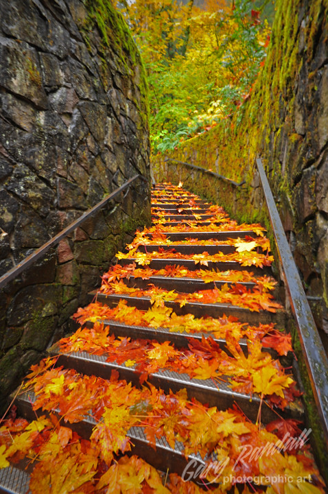 Fall Colors Mobile Wallpaper Fall On The Stairs Autumn Leaves At Multnomah Falls