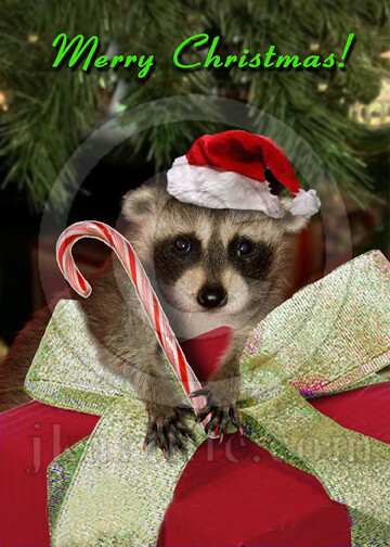Christmas Raccoon 824179 To Purchase Or See A Wider