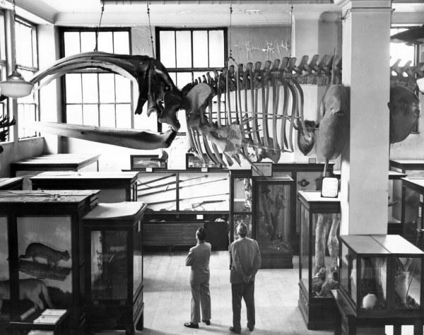Natural History Museum North Carolina