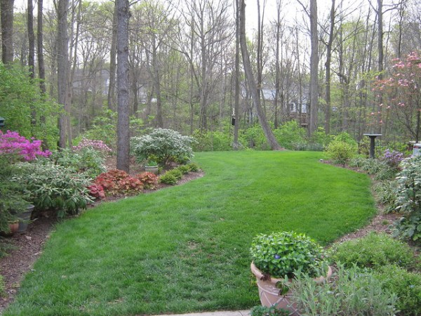 wooded backyard landscaping