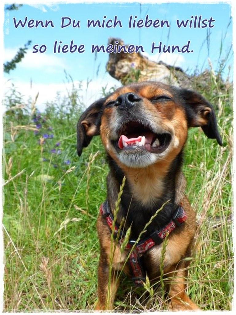 Die Besten Bilder Von Basteln Abschied Vom Hund Sprüche