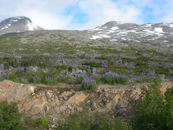 subalpine landscape