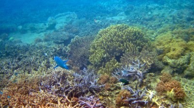 Blue Pearl Bay Fringing Reef | Typical snorkeling scene at ...