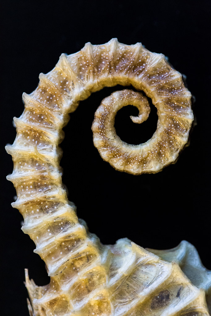 Day 11 Seahorse Spiral  I asked the Earth Science