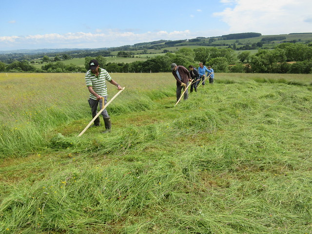 Scything in Northumbria