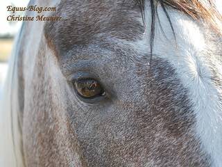 Alpha Horse Leadership Training for Humans can be Utilised by Individuals and Business Teams