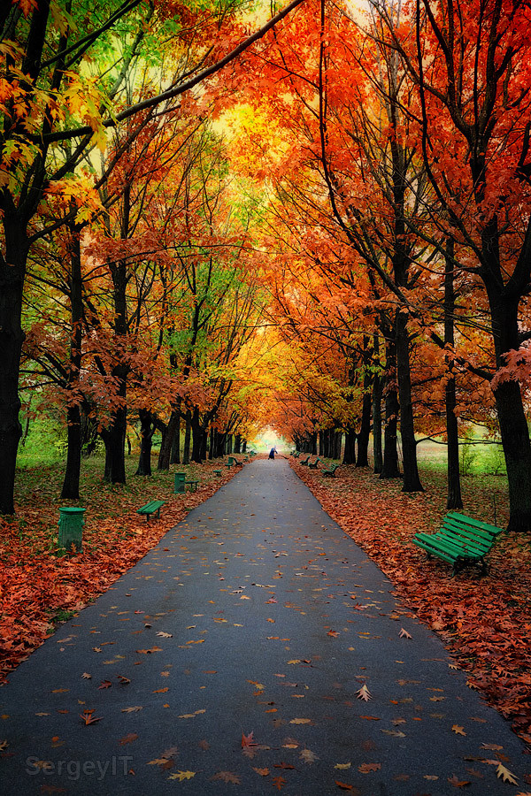 4k Fall Michigan Wallpaper Autumn Trees In Park With Colorful Leaves Autumn Trees