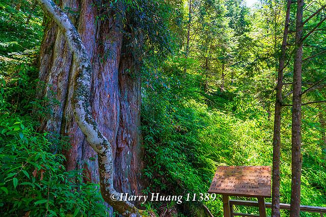 Harry_11389,棲蘭神木園區,6號神木,孔子,棲蘭神木園,神木園,中國歷代神木園區,棲蘭檜木原生林,馬告國家… | Flickr