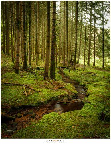 Een meanderend beekje in het bos met miniatuur watervalletjes en stroom versnellingen