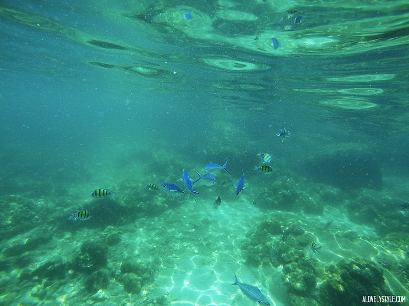 Snorkel Koh Lipe (1)