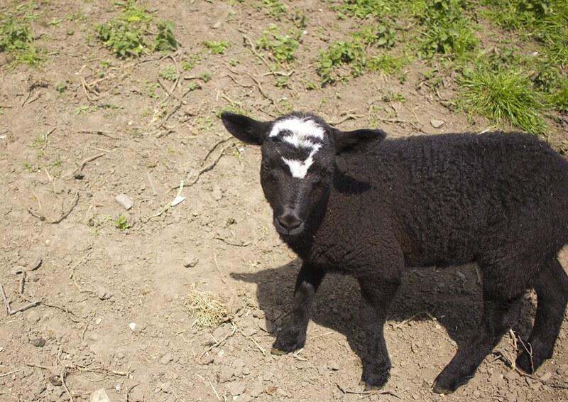newcastle, visit newcastle, a day in newcastle, newcastle tour, newcastle tourism, ouseburn farm, ouseburn, ouseburn farm animals, ouseburn newcastle, ouseburn farm newcastle