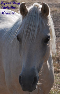 Microcurrent Therapy for Horses | Equus Education
