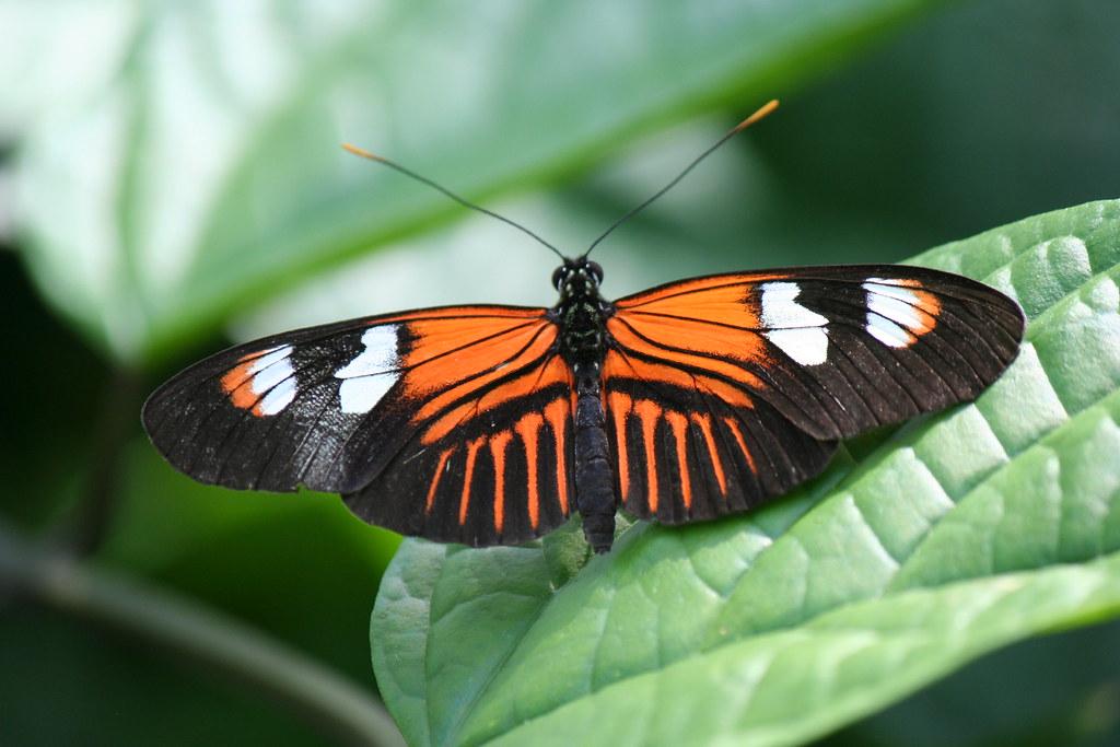 Butterfly Reiman Gardens Iowa State University Ames