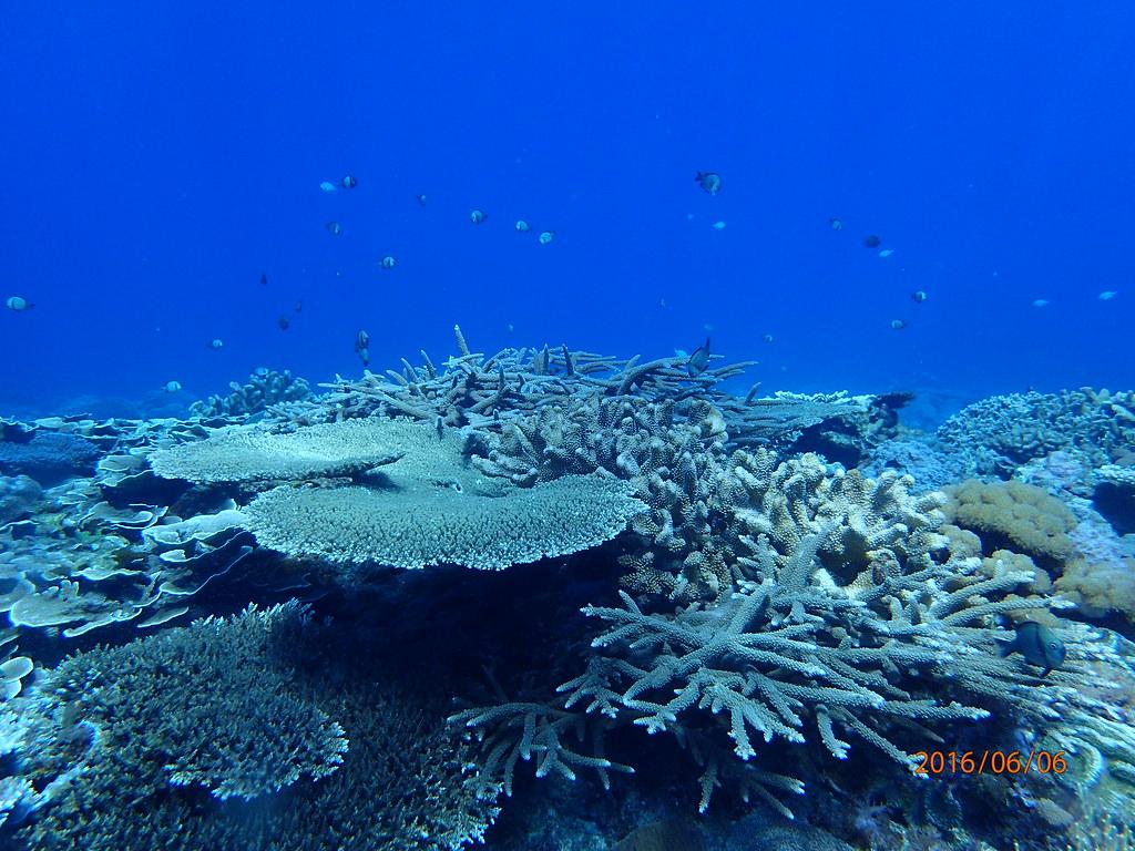 水深十米溫度飆至30°C 綠島珊瑚礁現零星白化   臺灣環境資訊協會-環境資訊中心