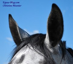 Peer to Peer Lending for the Equine Industry, would you Invest?