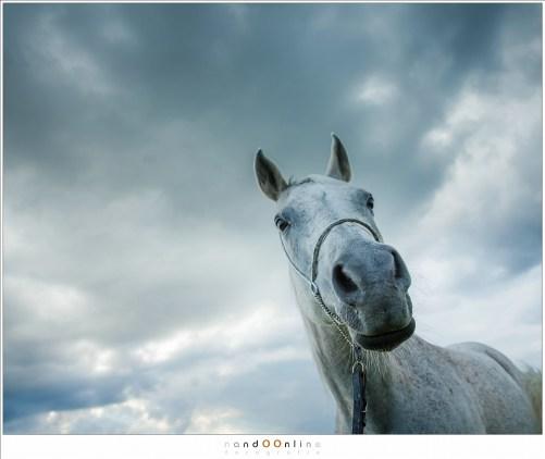 Mijn favoriete portret van de fotosessie (24mm - ISO100 - f/5,6 - t=1/250)