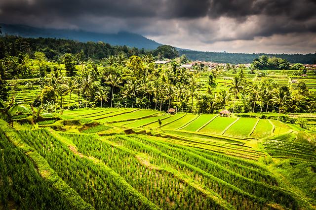 峇里島自由行購物指南 « 旅知部落格
