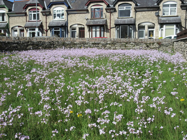 Urban wildflower meadow
