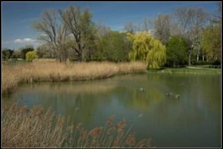 Ducks on the Irissee