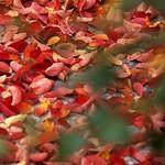 深まる秋の北イタリア
