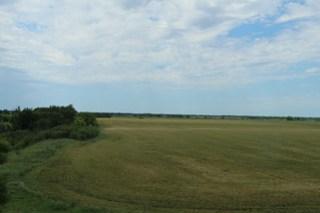 Z Crew: green wheat