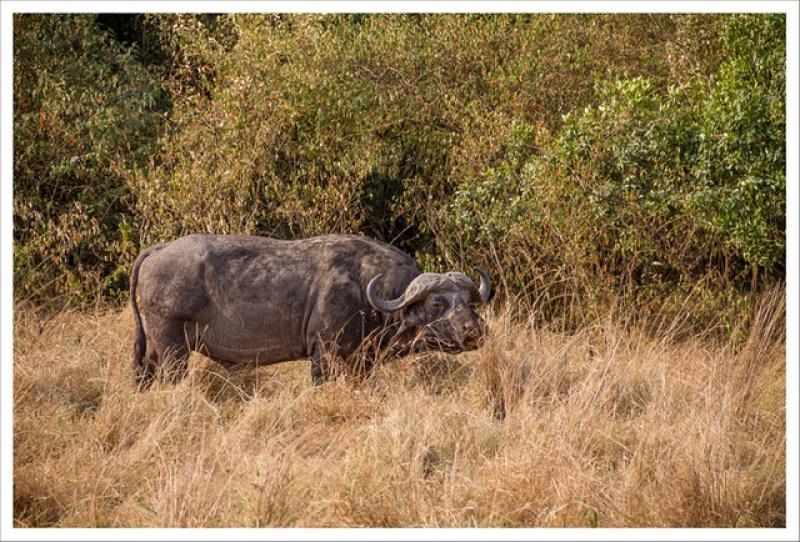 MasaiMara-55