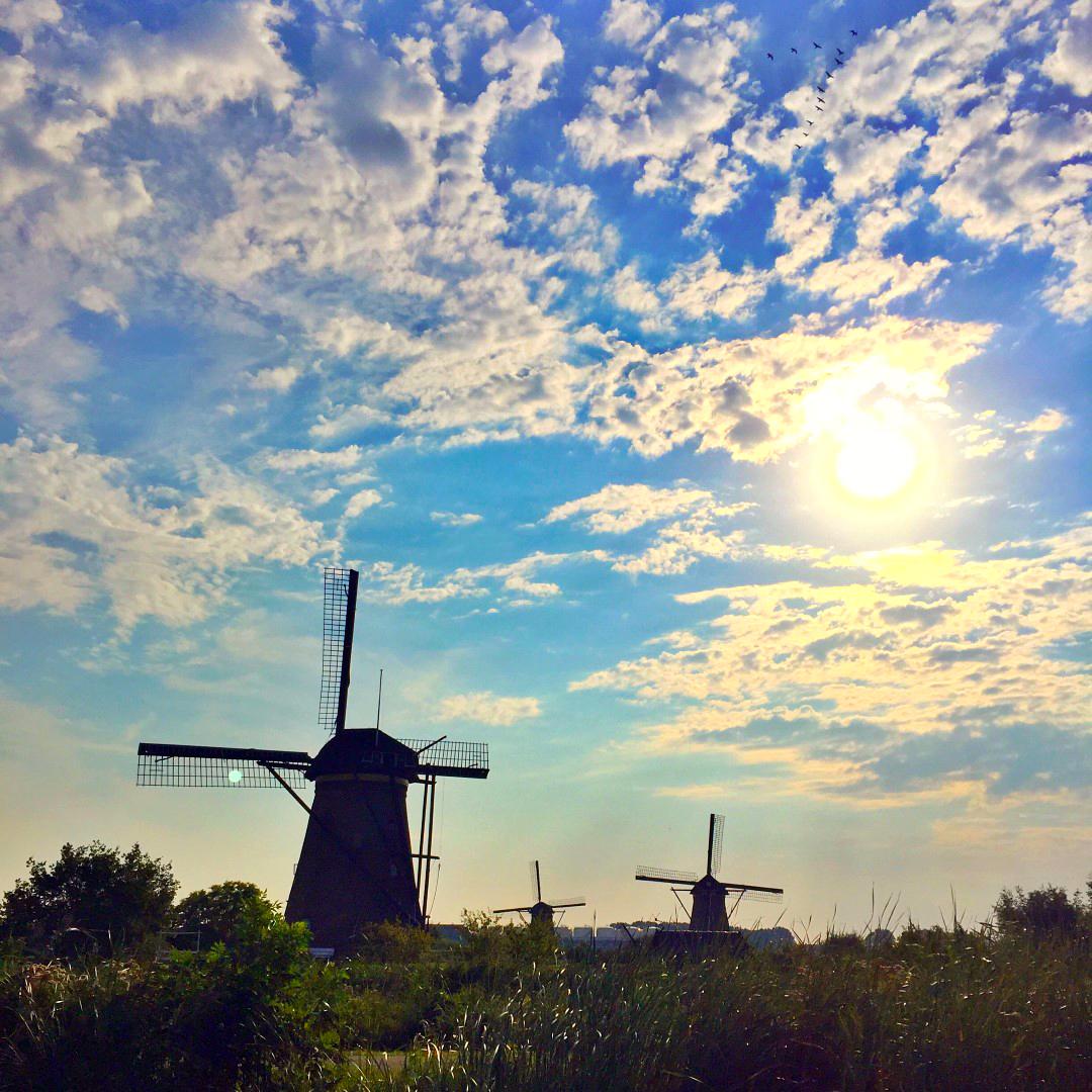 Amsterdam con Perro, Amsterdam con Mascotas Amsterdam con perro Visitar Amsterdam con perro 29431762345 98e2173cf3 o