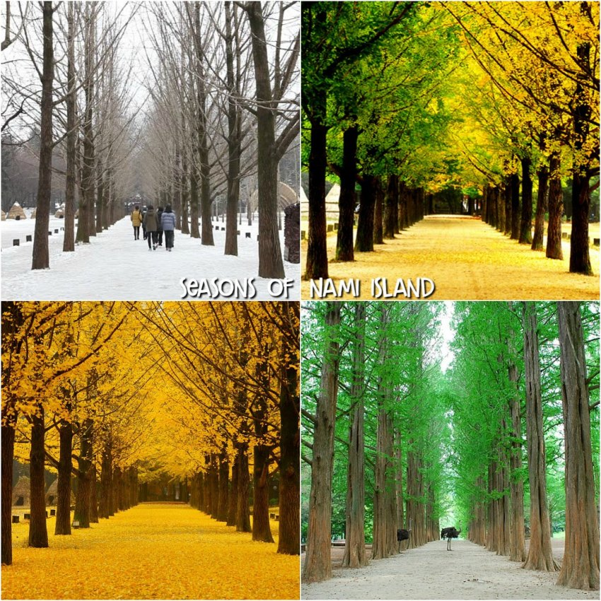Seasons of Nami Island
