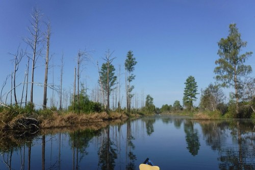 Lowcountry Unfiltered at Okefenokee-037