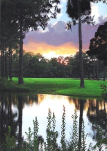 Bay County and surrounding areas have some of the best golf in the country.