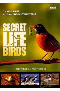 Image result for secret life of birds