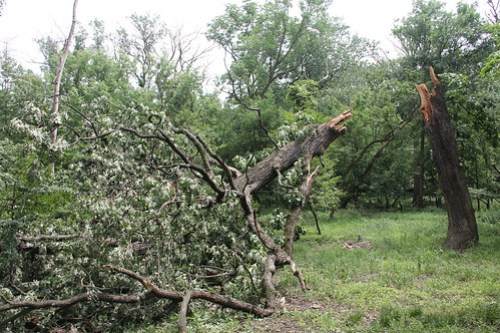 Storm Damage, June 21, 2011, Skokie and Morton Grove