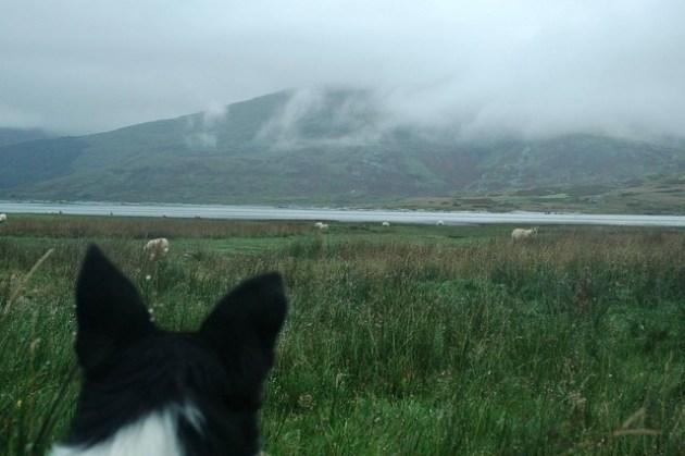 Loch Beg in the rain