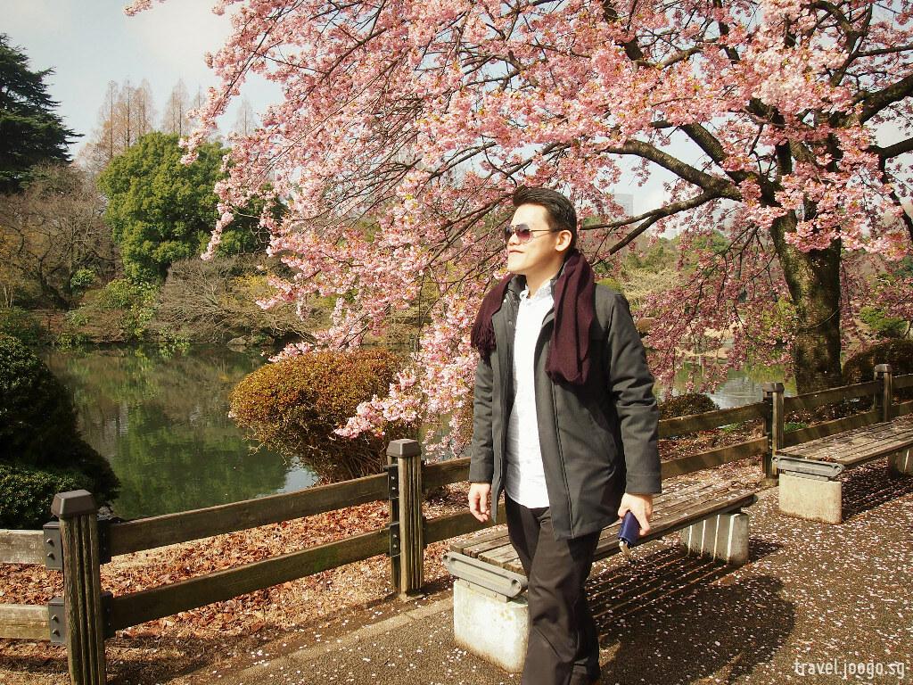 Shinjuku Gyoen Spring Sakura 3 - travel.joogo.sg