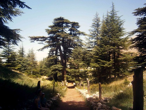 Cedars of God Path