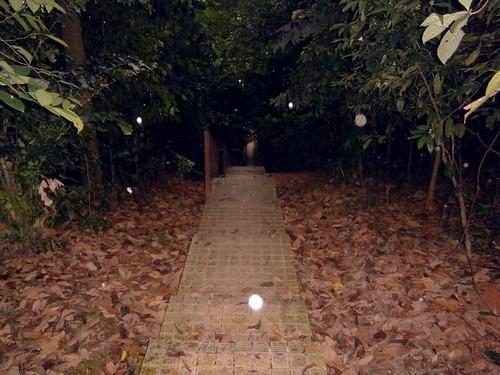 Jungle Trail in the rain