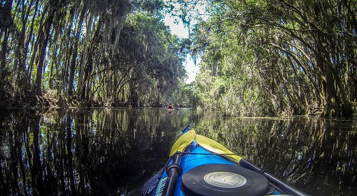 Lowcountry Unfiltered at Okefenokee-82
