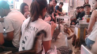 Crowded cat cafe