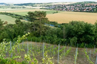 Vitzenburger Schlossberg