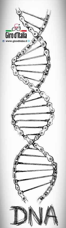 Cycling DNA